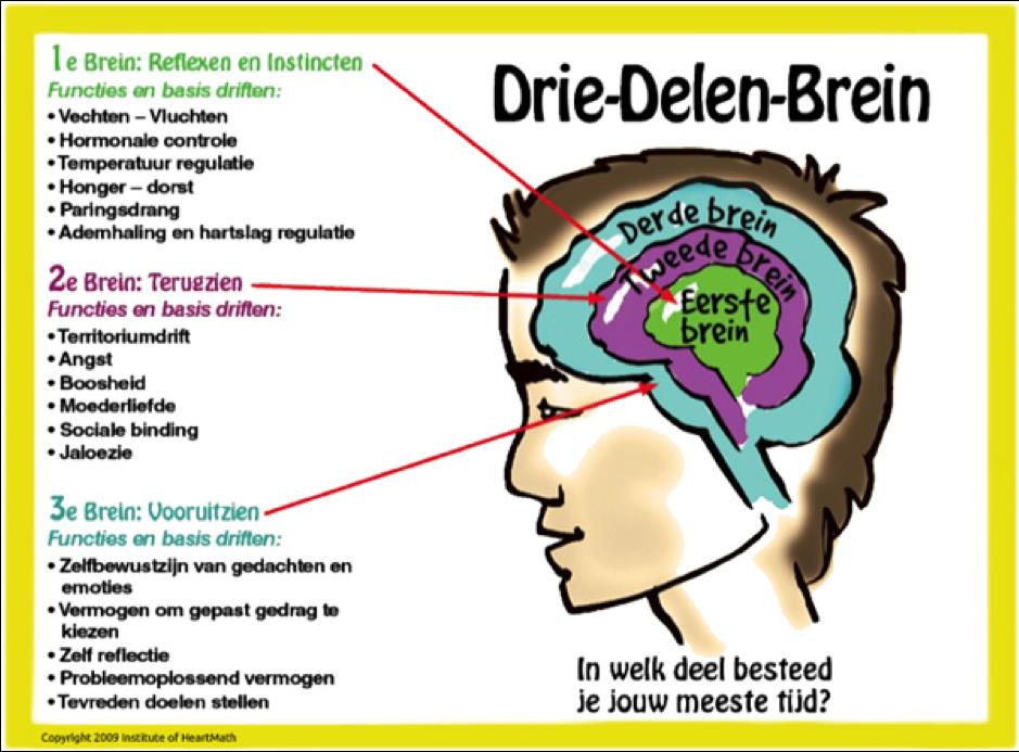 drie delen brein